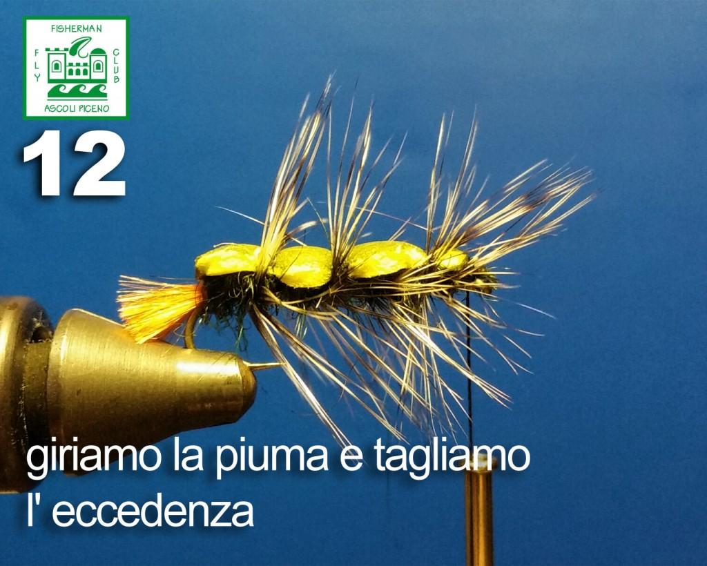 bruco12