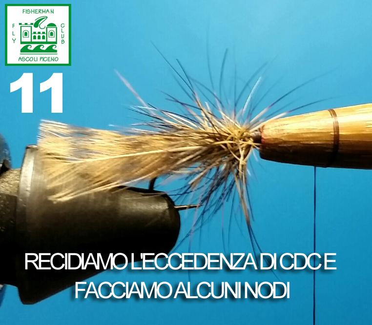 11 CDC