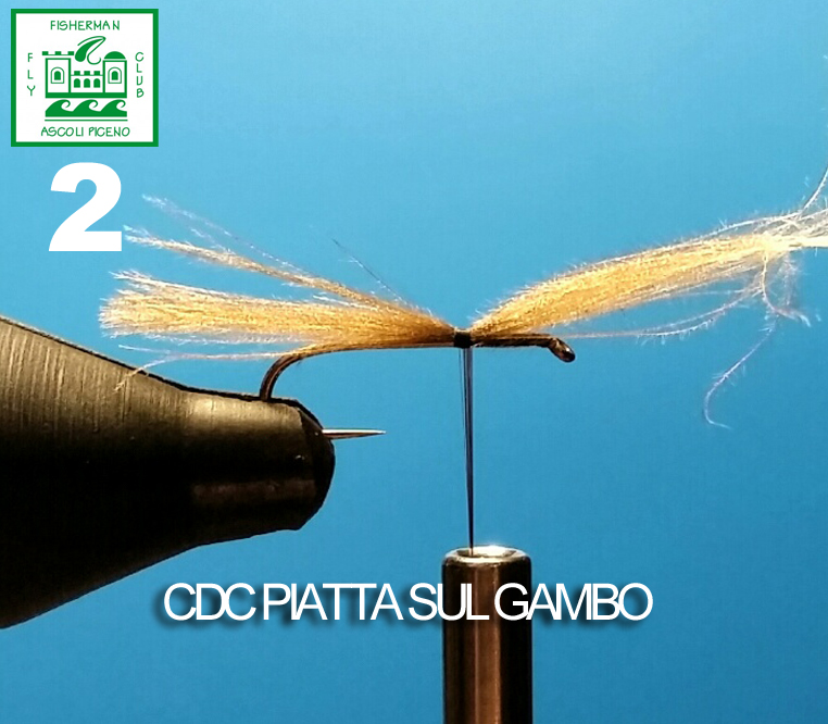 2 CDC