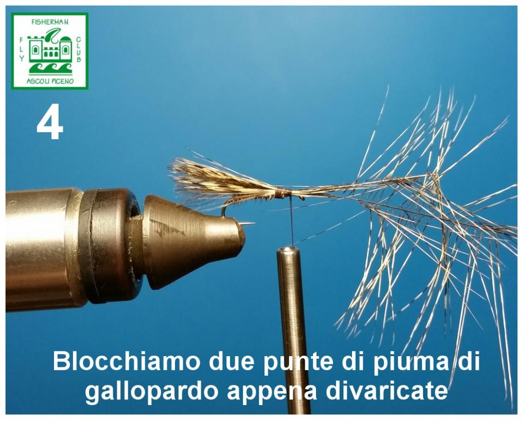 Plecopunthackles_4